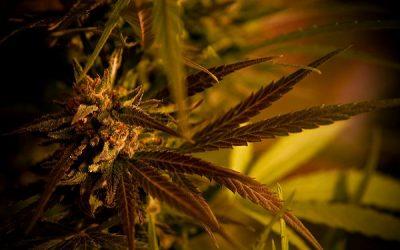 Ohio's medical marijuana program: What you need to know