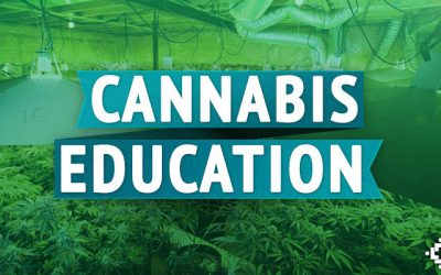Want a Career in Weed or Hemp in Ohio? There Are Schools For That